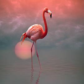Stephen Warren - Flamingo Skies