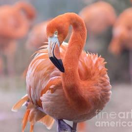 Rima Biswas - Flamingo, the orange beauty