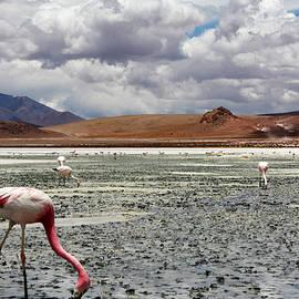 Aidan Moran - Flamingos On Uyuni Salt Flats