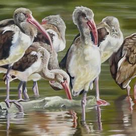 Phyllis Beiser - Fledgling Ibis Study