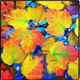 Amy Beam - Fleeting Moments Of Autumn