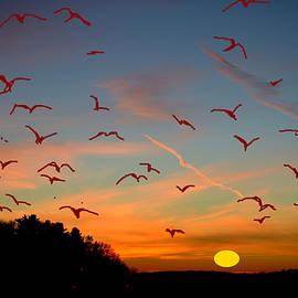Anand Swaroop Manchiraju - Flight In Heights