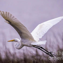 Bill And Deb Hayes - Flight Of The Great Egret