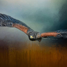 Jai Johnson - Flight Of The Harris Hawk