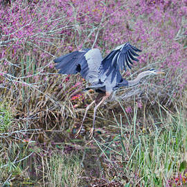 Judy Kay - Flight of the Heron Version 2