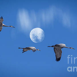 Janice Rae Pariza - Flight To The Nest