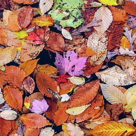 Morris Finkelstein - Floating Autumn Leaves On A Lake