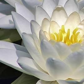 Bruce Bley - Floating Beauty