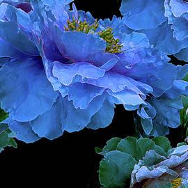 Lynda Lehmann - Floating Bouquet 14