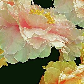 Lynda Lehmann - Floating Bouquet 31