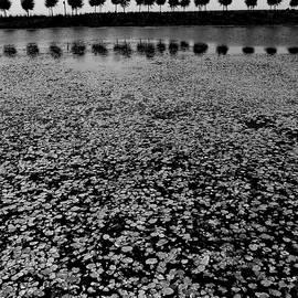Tianxin Zheng - Floating Leaves