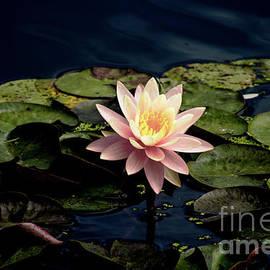Steven Parker - Floating Pink