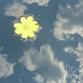 Floating Reflection