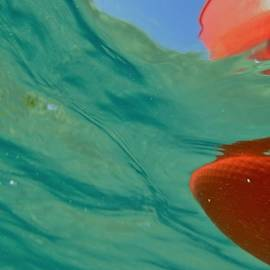 Catherine BELLOEIL - Floats