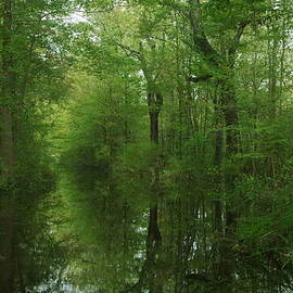 Aaron Rushin - Flooded Forest