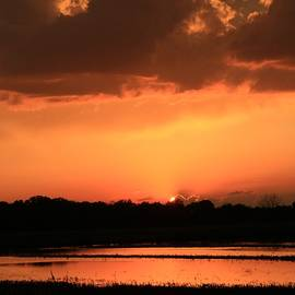 Chris Berry - Flooded Cornfield