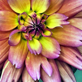 Janice Drew - Flora Center