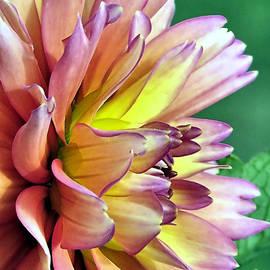 Janice Drew - Flora