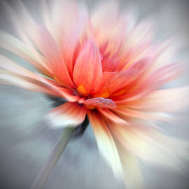 Debbie Nobile - Floral Abstract