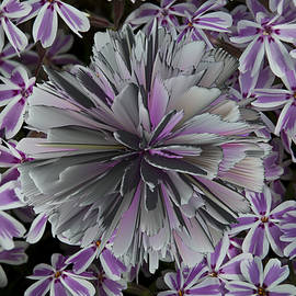 Deborah Klubertanz - Floral Arrangement
