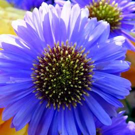 Lorainek Photographs - Floral Explosion