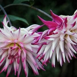 Patricia Strand - Floral Explosion