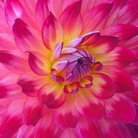 Patricia Strand - Floral Fantasia