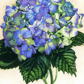 Barbara Jewell - Floral Favorite