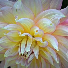 Toni Abdnour - Floral Fireworks