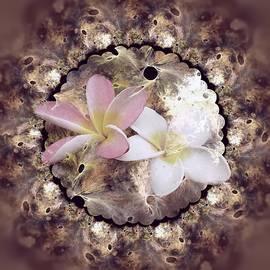 Nancy Pauling - Floral Fractal
