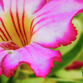 Joveria Wajih - Floral macros