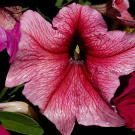 Dave Byrne - Floral Outburst