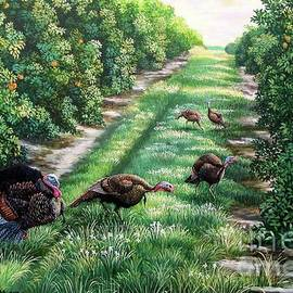 Daniel Butler - Florida-Orange Groves-Osceola Turkeys