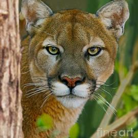 Larry Nieland - Florida Panther