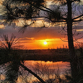 HH Photography of Florida - Florida Pine Sunset