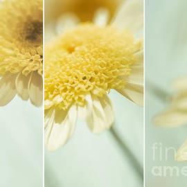 Natalie Kinnear - Flower Arrangement - Marguerite Daisies