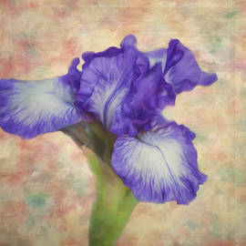 Jordan Blackstone - Flower Art - The Meaning of an Iris