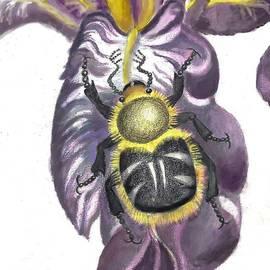 Dawn Senior-Trask - Flower Beetle
