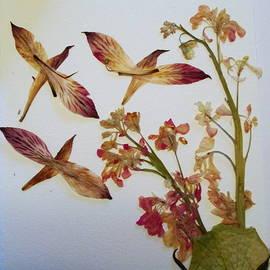 Bill OConnor - Flower Birds