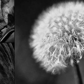 Karen Slagle - Flower Collage in Black and White