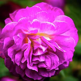Maria Coulson - Flower in a Garden
