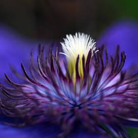 Wanda Brandon - Flower Light