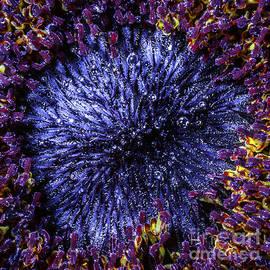 Mariusz Sprawnik - Flower macro