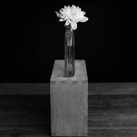 Ian Barber - Flower On A Box