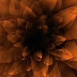 Flower  Orange - Johan Lilja