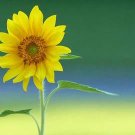 Lori Deiter - Flower Power