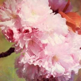 Sharon Johnston - Flowering Cherry Cluster