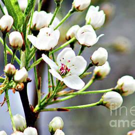 Don Baker - Flowering Tree