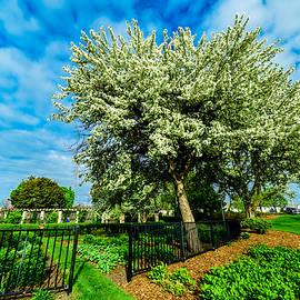 Randy Scherkenbach - Flowering Trees
