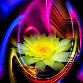 Walter Zettl - Flowermagic 14  Water Lily